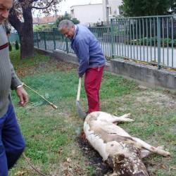 Tradičná domáca zabíjačka